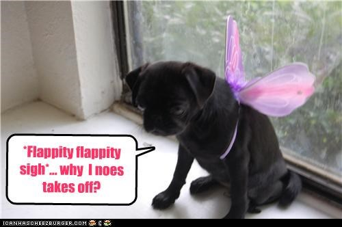 confused,confusion,costume,cute,FAIL,fairy,flapping,Hall of Fame,pug,puppy,Sad,sigh,take off,wings