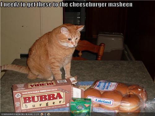 Cheezburger Image 4129835008
