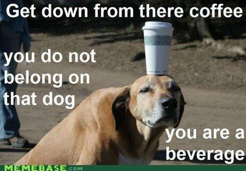 coffee good dog hat Memes silly thing - 4129879808