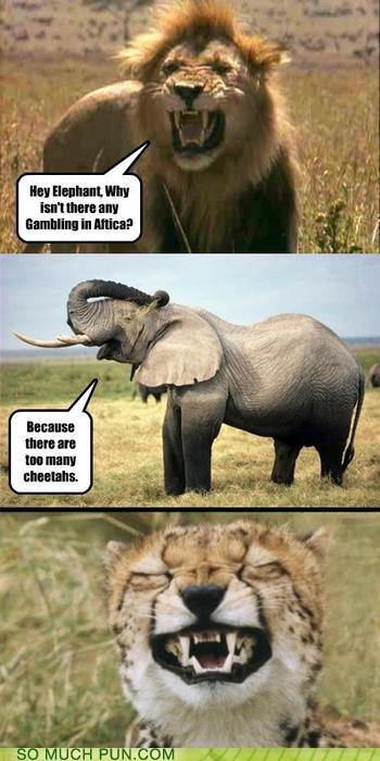 answer comic elephant joke lion question - 4130105600