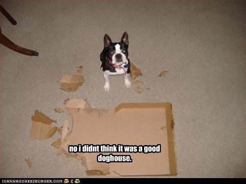 no i didnt think it was a good doghouse.