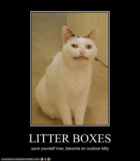 Cats,critters,feces,litter boxes,outdoor,save yourself