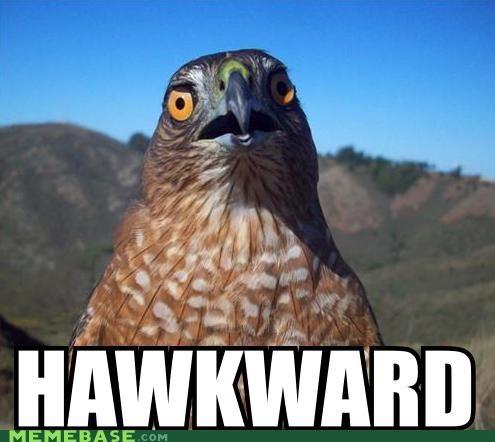 Awkward hawk Memes - 4130547456