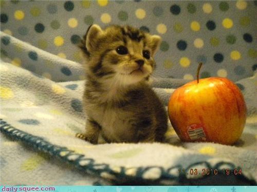 kitten pets user - 4130988544