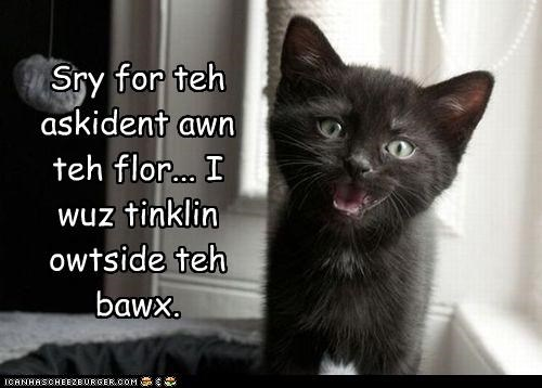 accident box caption captioned cat kitten litter box pun sorry thinking tinkling - 4131259136