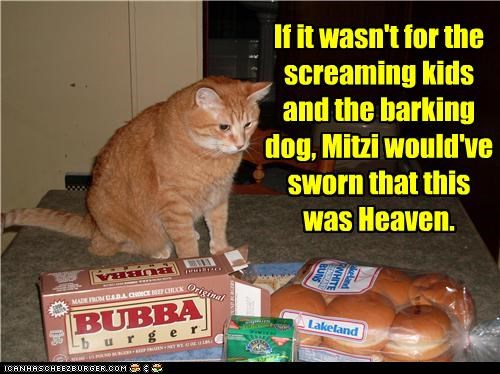 barking,bun,burger,caption,captioned,cat,dogs,exception,heaven,kids,screaming,tabby