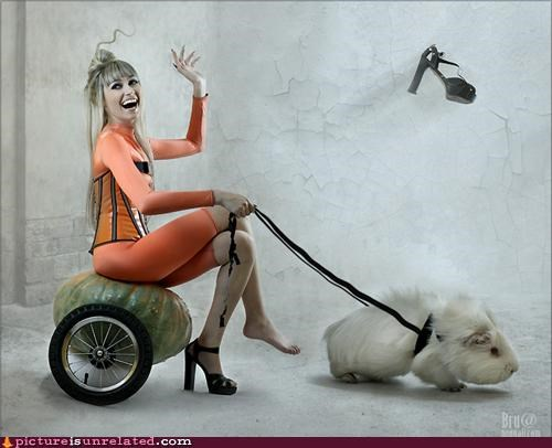 art,foot,guinea pig,really wtf,shoes,surrealism,woman,wtf