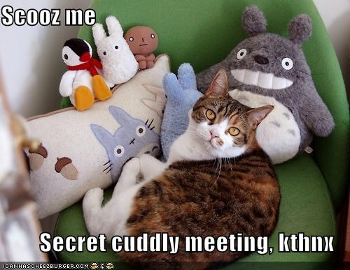 caption,captioned,cat,excuse me,kthnx,meeting,Pillow,secret,stuffed animal,totoro