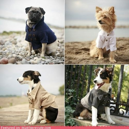 accessory chic clothing dogs fashion pets - 4133017856