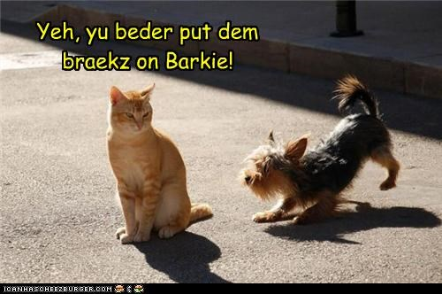 brakes braking caption captioned cat dogs thats-right yeah yorkshire terrier - 4133474048