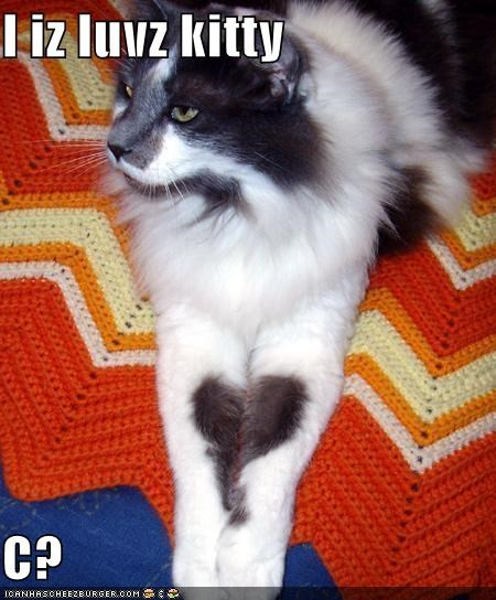 Cheezburger Image 4133485056