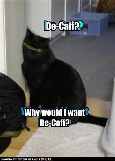 blurry caffeinated caffeine caption captioned cat coffee decaf Hall of Fame hyper question stupid why - 4133511936