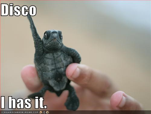 awesome caption captioned dancing disco i has pose posing turtle - 4133550848