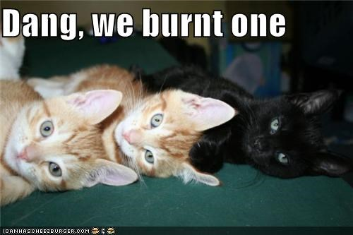 3 accident black burned burnt caption captioned cat Cats dang mistake tabby three whoops