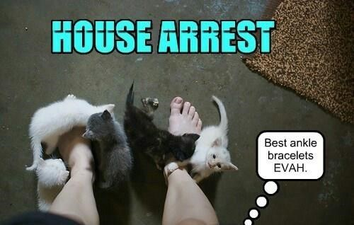 a funny list of lol cats