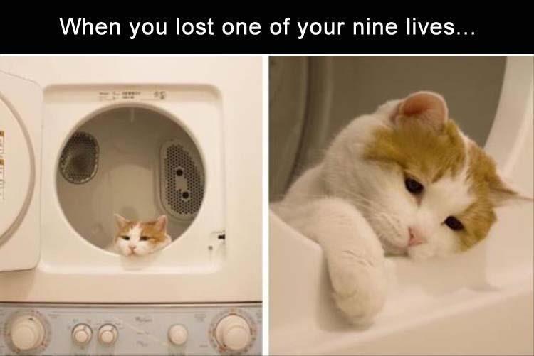 caturday memes
