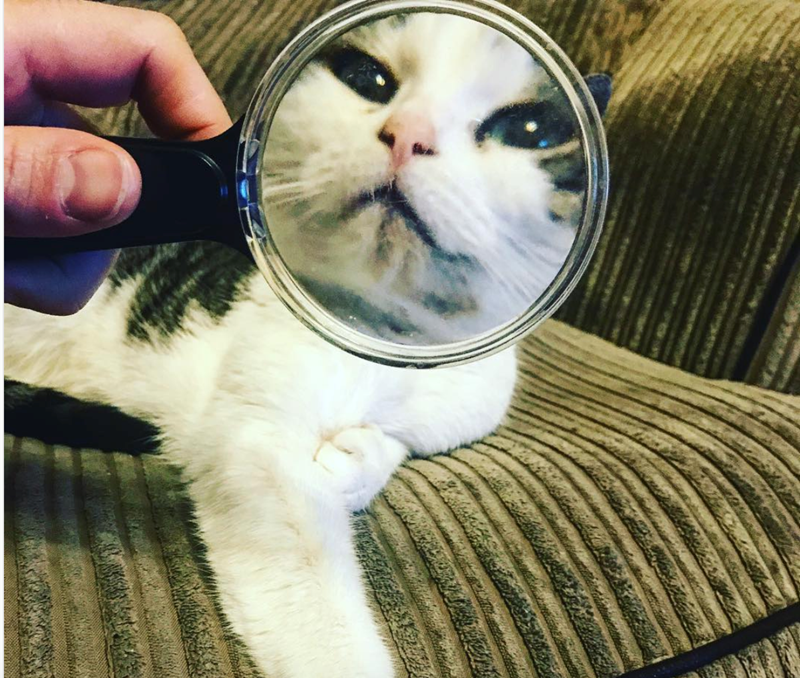 a funny list of cats close up