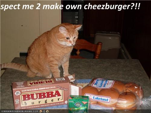 Cheezburger Image 4134732032