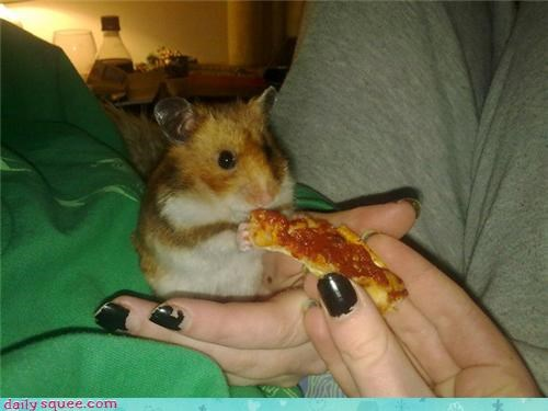hamster,noms,pet,pizza,reader squee,snack