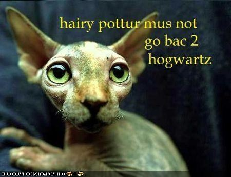 big eyes books caption captioned Dobby hairless Hall of Fame Harry Potter - 4136485632