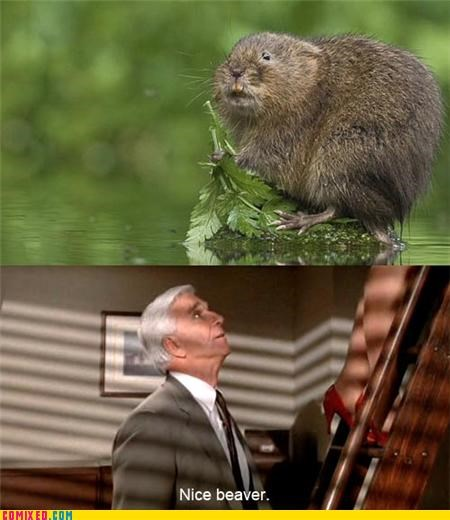 animals beaver From the Movies leslie nielsen Naked Gun puns woman parts - 4136680704