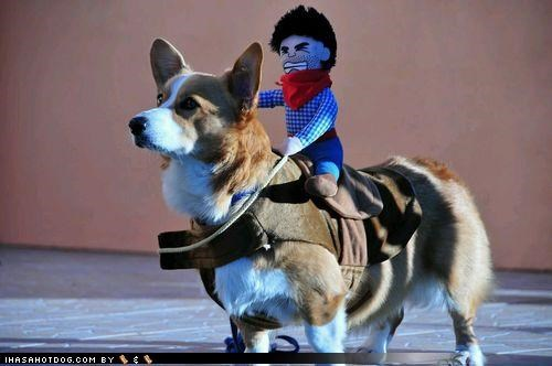 awesome corgi costume cowboy cute doll dressed up funny Hall of Fame themed goggie week - 4136907008