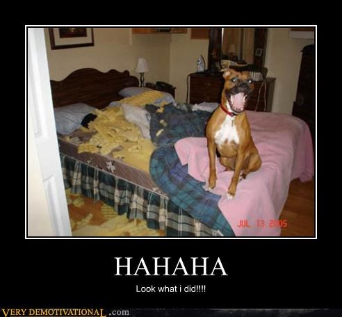 haha happy dogs - 4137041408