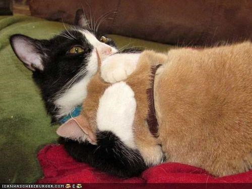 cyoot kitteh of teh day,hug,Sad,sleeping,tired,wrestling
