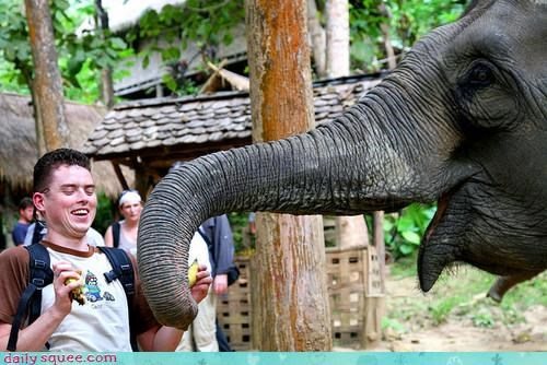 acting like animals awesome elephant food meme noms stealing trunk your argument is invalid - 4137370880