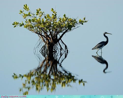 acting like animals amazing awesome beautiful confusing disoriented heron image optical illusion reflection wading