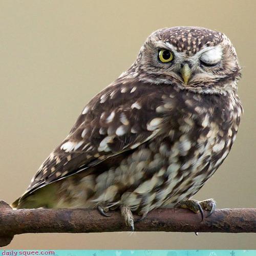 acting like animals Owl pickup line pun winking - 4137381120