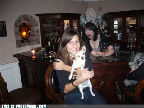 animals,bad joke,bar,ladies,pets,photobomb,puns,wine