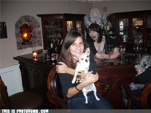 animals bad joke bar ladies pets photobomb puns wine - 4137393664