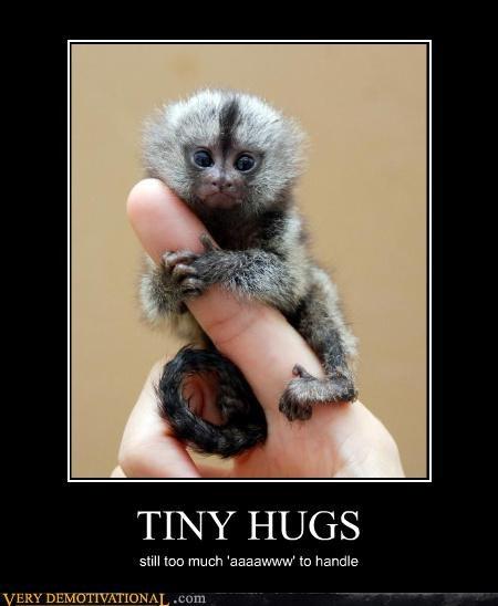aww tiny hugs cute monkey - 4137468160