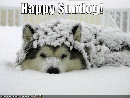 cute Hall of Fame happy happy sundog hiding husky puppy snow Sundog - 4137495296