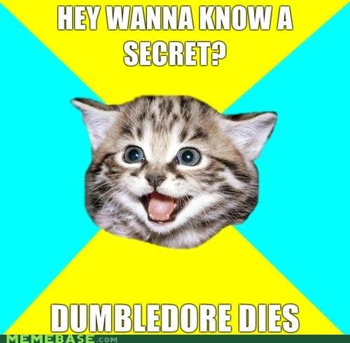 dumbledore,Happy Kitten,Harry Potter,Hogwarts,spoilers,witchcraft,wizardry