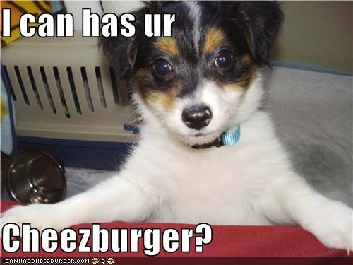 Cheezburger Image 4138852608