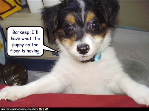 alcohol,bar,barkeep,border collie,cute,drinking,funny,mixed breed,order,puppy,what-hes-having