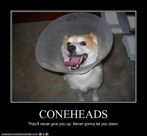 CONEHEADS They'll never give you up. Never gonna let you down.