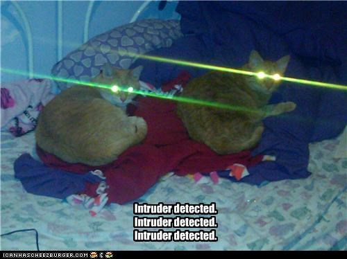 caption captioned cat Cats detected eyes intruder laser laser eyes laser kitteh tabby - 4139674880