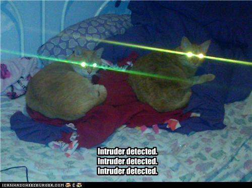 caption captioned cat Cats detected eyes intruder laser laser eyes tabby - 4139674880