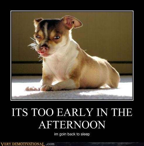 sleep,too early,afternoon,dogs