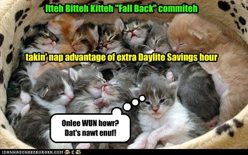 caption,captioned,cat,complaining,daylight savings time,fall,fall back,itteh bitteh kitteh committeh,kitten,napping,taking advantage