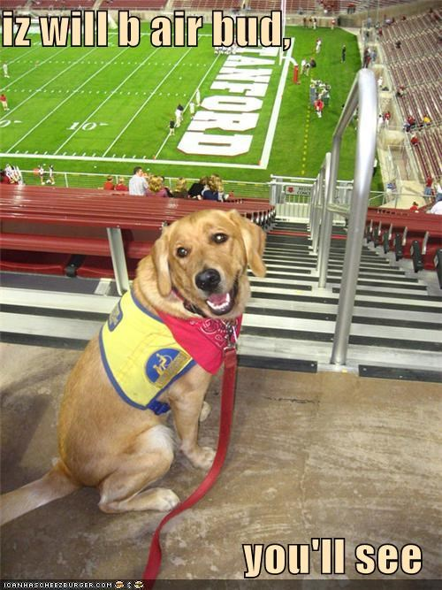 air bud,bandana,dreams,football,goals,harness,hope,youll-see