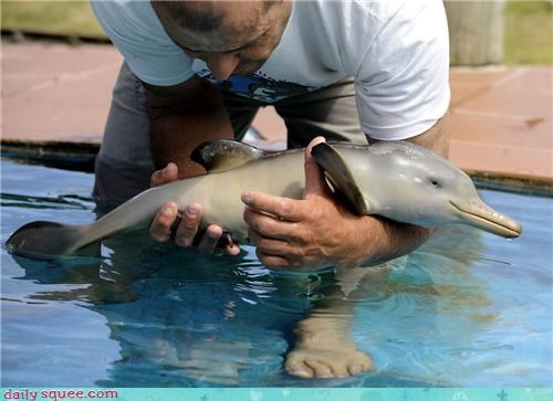 baby dolphins water swimming squee