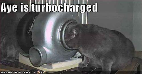 Cheezburger Image 414353152