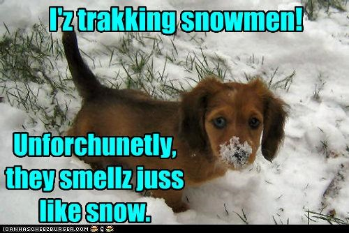 I'z trakking snowmen! Unforchunetly, they smellz juss like snow.