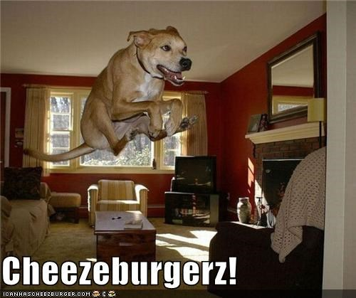 Cheezburger Image 4144700160