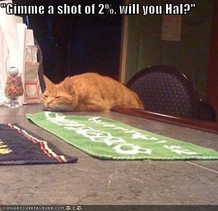 2 bar bartender caption captioned cat drink drunk gimme milk slouched tabby