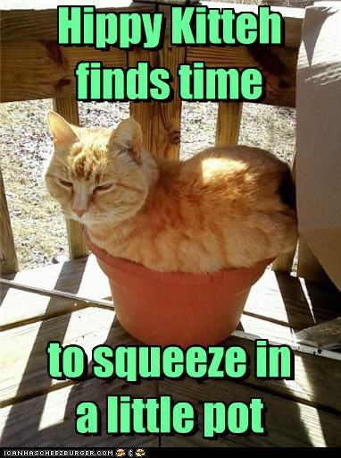 Hippy Kitteh finds time to squeeze in a little pot Hippy Kitteh finds time to squeeze in a little pot